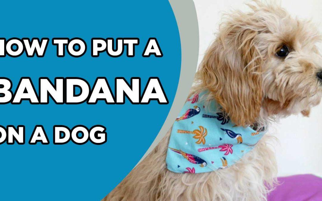 How to Put a Bandana on a Dog