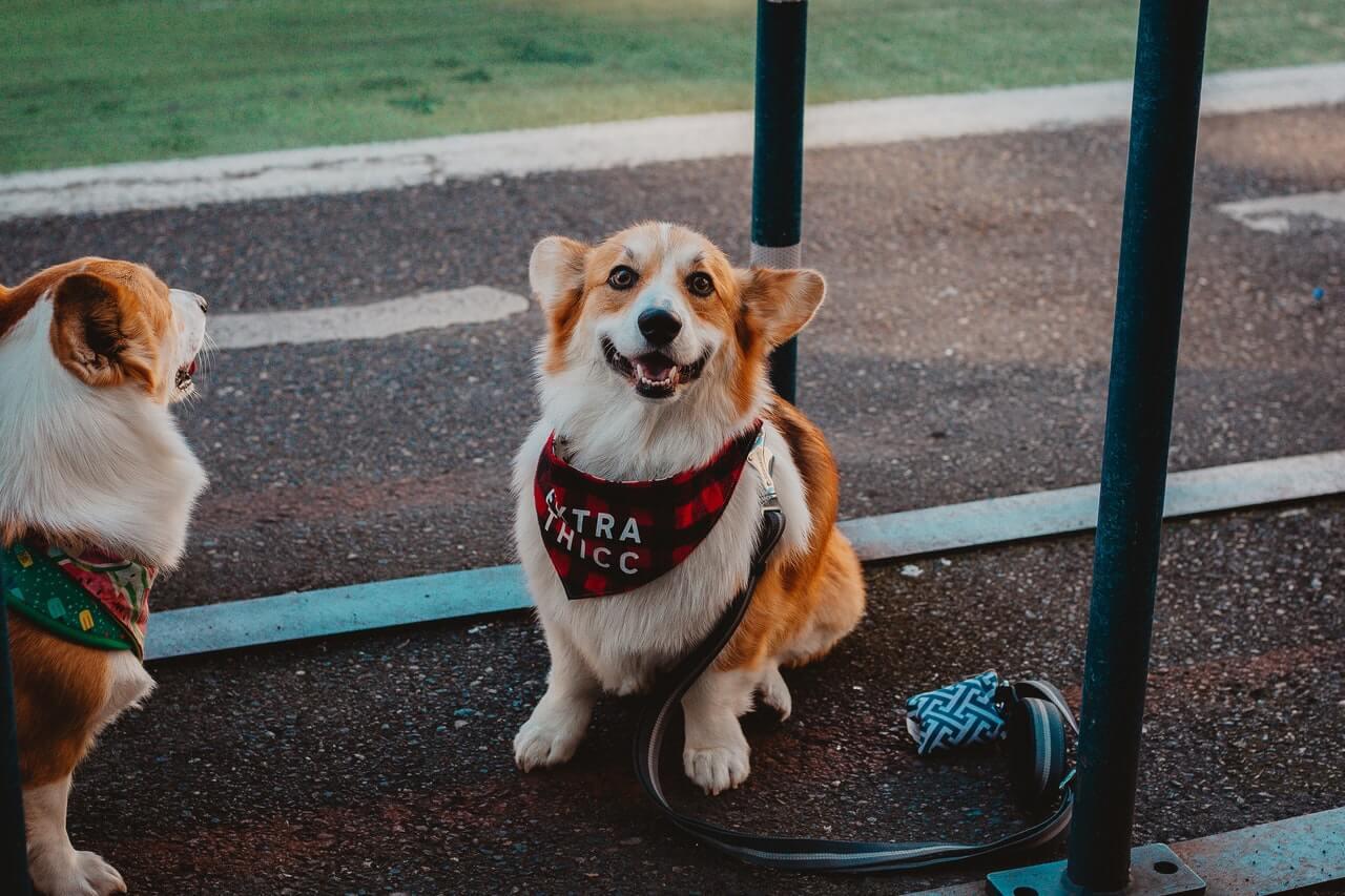 the Point of a Dog Bandana-3