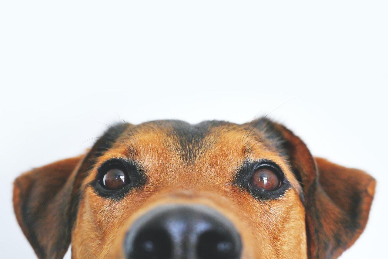 the Point of a Dog Bandana